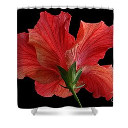Shower Curtain featuring the photograph Looking Back by Judy Whitton