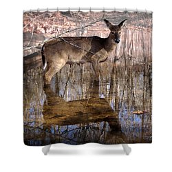 Looking Cute Shower Curtain by Bill Stephens