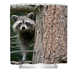 Looking For Food Shower Curtain by Cheryl Baxter