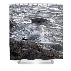 Shower Curtain featuring the photograph Looking Out To Sea by Eunice Miller