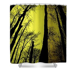 Looking Through The Naked Trees  Shower Curtain by Jeff Swan
