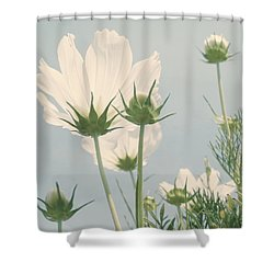 Looking Up Shower Curtain by Kim Hojnacki