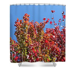 Shower Curtain featuring the photograph Looking Upward by Debbie Hart