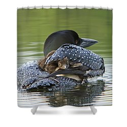 Loon Chick - Peek A Boo Shower Curtain