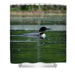 Loon On Indian Lake Shower Curtain