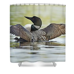 Loon Wing Spread With Chick Shower Curtain by John Vose
