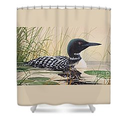 Loon's Tranquil Shore Shower Curtain