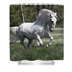 Loose In The Paddock Shower Curtain by Wes and Dotty Weber