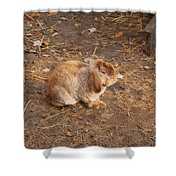 Shower Curtain featuring the photograph Lop Eared Bunny by Bob Sample