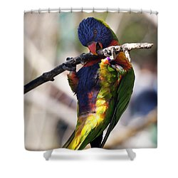 Lorikeet Bird Shower Curtain by Marilyn Hunt