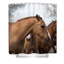 Los Caballos De La Estancia Shower Curtain