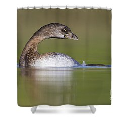 Shower Curtain featuring the photograph Loss-neck Grebe by Bryan Keil