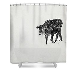 Lost Calf Struggling In A Snow Storm Shower Curtain by Edward Fielding