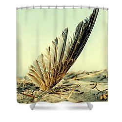 Lost Feather At The Beach Shower Curtain by Mike Santis