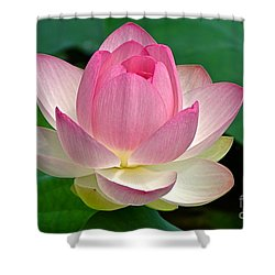 Shower Curtain featuring the photograph Lotus 7152010 by Byron Varvarigos