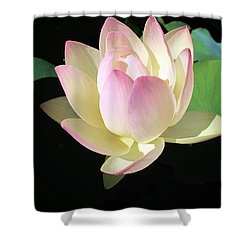 Lotus 9 Shower Curtain
