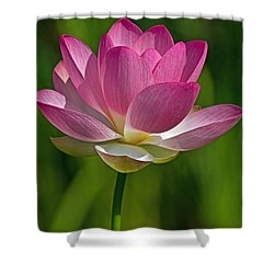 Shower Curtain featuring the photograph Lotus Bloom by Jerry Gammon