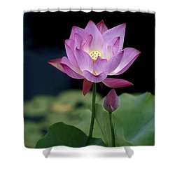 Lotus Blossom Shower Curtain by Penny Lisowski