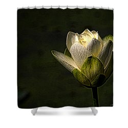 Shower Curtain featuring the photograph Lotus Blossom by Travis Burgess