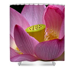 Lotus-center Of Being II Dl030 Shower Curtain by Gerry Gantt