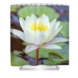 Lotus Flower 02 Shower Curtain