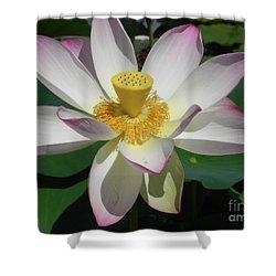 Shower Curtain featuring the photograph Lotus Flower by Chrisann Ellis