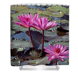 Lotus Flower Shower Curtain by Sergey Lukashin