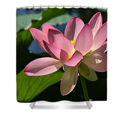 Lotus - Flowers Shower Curtain