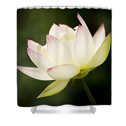 Lotus Glow Shower Curtain