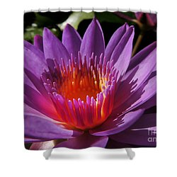Shower Curtain featuring the photograph Lotus by Kristine Merc