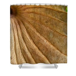 Shower Curtain featuring the photograph Lotus Leaf by Jane Ford
