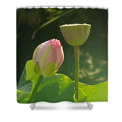 Shower Curtain featuring the photograph Lotus Soft by Evelyn Tambour