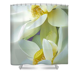 Lotuses In Bloom Shower Curtain