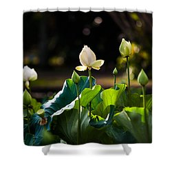 Lotuses In The Evening Light Shower Curtain by Jenny Rainbow