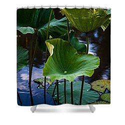 Lotuses In The Evening Light. Vertical Shower Curtain by Jenny Rainbow