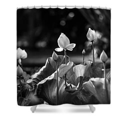 Lotuses In The Pond. Black And White Shower Curtain by Jenny Rainbow