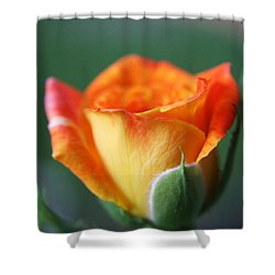 Shower Curtain featuring the photograph Louisiana Orange Rose by Ester  Rogers