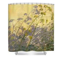 Lovage Clematis And Shadows Shower Curtain by Timothy  Easton