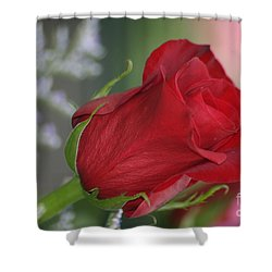 Love Is Forever Shower Curtain by Living Color Photography Lorraine Lynch
