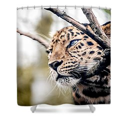Shower Curtain featuring the photograph Love Panther Iv by Stwayne Keubrick