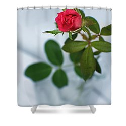 Love Whispers Softly Shower Curtain