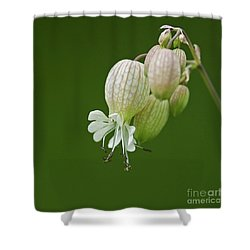 Lovely Bubbles... Shower Curtain by Nina Stavlund