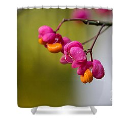 Lovely Colors - European Spindle Flower Seeds Shower Curtain