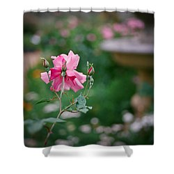 Lovely In Pink Shower Curtain by Linda Unger