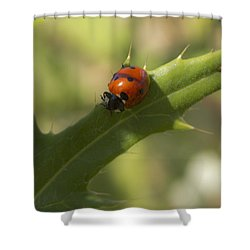 Lovely Lady Bug Shower Curtain by Shelly Gunderson