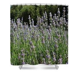Lovely Lavender Shower Curtain