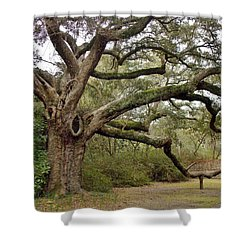 Lovely Live Oak Shower Curtain
