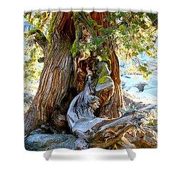 Lovely Tree Maiden Shower Curtain