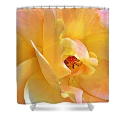 Lovely Yellow And Peach Rose Shower Curtain