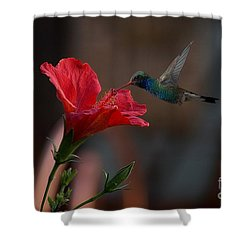 Shower Curtain featuring the photograph Loving The Hibiscus by John  Kolenberg